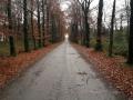 2014-12-10Elsendorp006 (Kopie)
